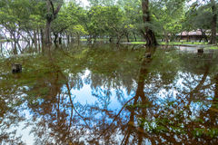 Flooding in the park. Rainy season flooding in the park the reflection of trees look like mirror stock photo