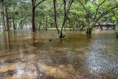 Flooding in the park. Rainy season flooding in the park the reflection of trees look like mirror stock images