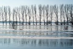 Flooding river. Flooding Warta river Stock Images