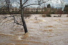 Flooding River. River approaching flood stage stock images