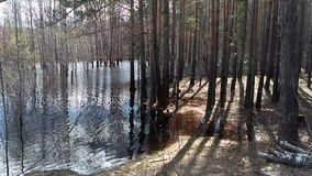 Flooding river. A cluster of trees surrounded by flood waters in a flooding river stock footage