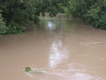 Flooding Stream. A stream overflows its banks, flooding the surrounding land after a heavy rain.  The brown water now carries nutrients that can harm the lake Stock Images