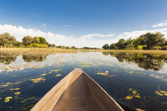 Dugout trip in Botswana. Canoe tour through flooded Okavango Delta, Botswana. Flooding time in the Okavango Delta in Botswana. You can only go to some parts by stock images
