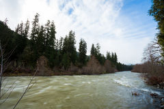 Flooding Willamette River Oregon Stock Images