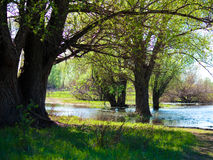 Flooding in the woods in spring Stock Image