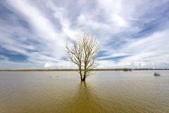 Floodland Royalty Free Stock Images
