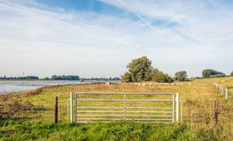 Floodplain of a Dutch river early in the morning Stock Image
