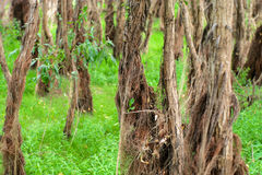 Floodplain forest Stock Photo