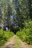 Floodplain forest path Stock Images