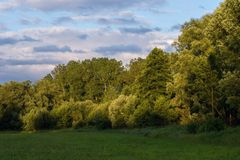 Floodplain forest at sunset Stock Images