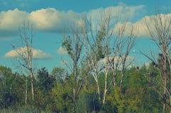 Floodplain forest trees and mackerel sky Stock Photos