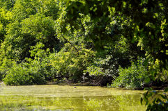 Floodplain forests and backwater Stock Photography