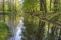 Floodplain forests. Floodplain forest is waterlogged forest with high groundwater royalty free stock images