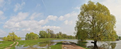 Floodplain meadow Stock Photography