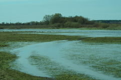 The floodplain of the river Sozh Stock Image