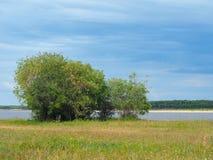 Floodplainen av floden Lena Royaltyfri Bild