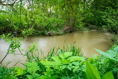 River in the Ukrainian countryside during a flood Stock Image