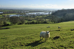 Floods in the Severn Vale Royalty Free Stock Image