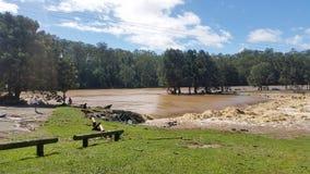 Floodwaters Oxenford Australië Stock Afbeeldingen
