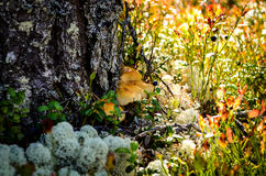 Flooer de région boisée couvert de champignons et de lichen images libres de droits