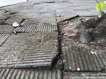 Floor break out from root of tree. Broken block floor effort by power of root tree stock images