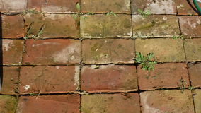 Floor of bricks royalty free stock images