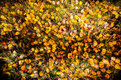 The floor of fall. Fall leaves on grass Royalty Free Stock Photos