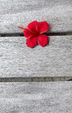 Floor and flower Stock Photography