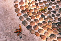 Floor. A Leaf  on stone floor Royalty Free Stock Images