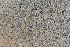 Floor paving consisting of small pebbles embedded in cement Royalty Free Stock Photos
