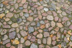 Floor of paving stones wet from the rain Stock Images