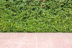 Floor tile and pattern of green plant wall texture Stock Photo