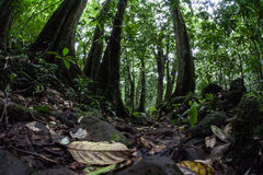Floor of Tropical Rainforest Royalty Free Stock Photography