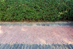 Floor and walls. Floor walk and trees walls Royalty Free Stock Photos