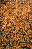 Floore anaranjado Fotos de archivo