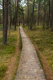 Flooring made of wooden planks footpath runs through the forest Royalty Free Stock Photos