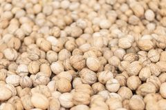 Flooring walnuts in shell royalty free stock photography
