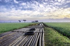 The floors are made of bamboo in the middle of rice fields. Is used as a place for farmer to start their activity. There also two unused tire, diagonally Royalty Free Stock Photos