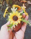 Flor à disposição Foto de Stock