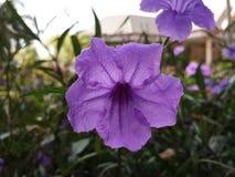 A flor é bonita Fotos de Stock Royalty Free