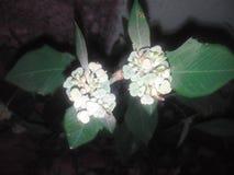 A flor é o amante 2 Foto de Stock Royalty Free