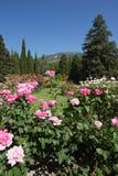 A flor é plantada densamente com os arbustos cor-de-rosa brancos e cor-de-rosa no jardim botânico Imagem de Stock