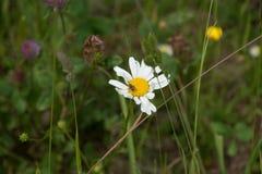 A flor é uma teia de aranha com insetos Imagem de Stock