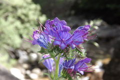 Flor/цветок Стоковое Изображение RF