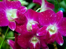 Flor 05 de la orquídea Imagen de archivo