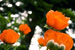 Flor #1 Foto de archivo