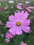Flor Imagens de Stock
