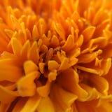 flor stockfotos