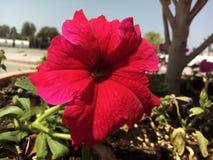 Flor fotografía de archivo libre de regalías