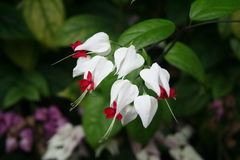 A flor Fotografia de Stock Royalty Free